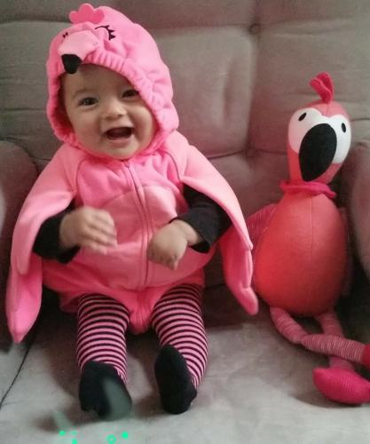 The world's cutest flamingo!